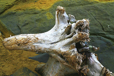 Photograph - Bleached Log On Rocks by Nareeta Martin