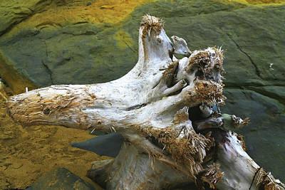 Photograph - Bleached Log On Rocks by Nareeta Martin
