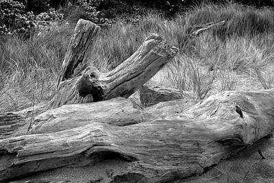 Photograph - Bleached Log On Sandy Beach. by Nareeta Martin