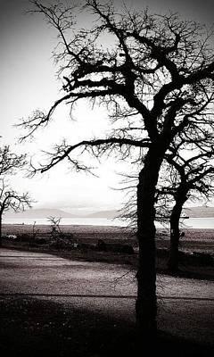 Photograph - Bleak by Lauren Williamson