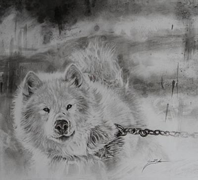 Bleak -sled Dog Original
