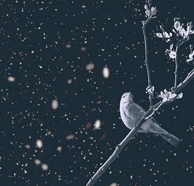 Titmouse Photograph - Bleak Winter by Martin Newman