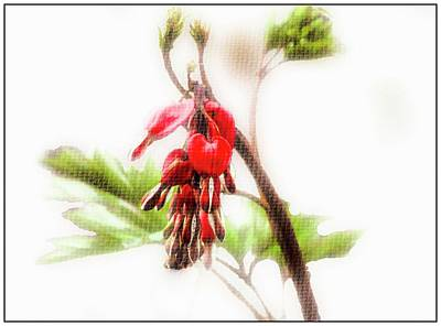 Digital Art - Bleeding Heart Flower by Rusty R Smith
