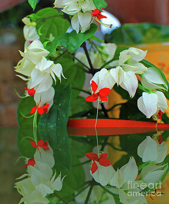 Photograph - Bleeding Heart I by Art Mantia