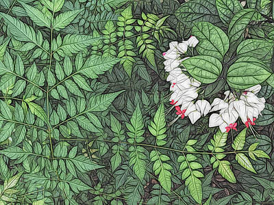 Photograph - Bleeding Hearts And Ferns Artistic by Aimee L Maher ALM GALLERY