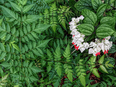 Photograph - Bleeding Hearts And Ferns H D R  by Aimee L Maher Photography and Art Visit ALMGallerydotcom