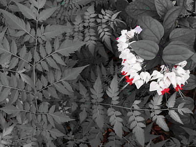 Photograph - Bleeding Hearts And Ferns Subtle Color by Aimee L Maher Photography and Art Visit ALMGallerydotcom
