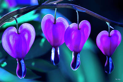Photograph - Bleeding Hearts In Moon Light by Skip Tribby