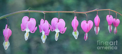 Digital Art - Bleeding Hearts by Liz Leyden