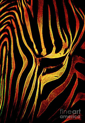Photograph - Zebra Stripes by Steven Parker