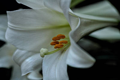 Photograph - Blessings  by Connie Handscomb
