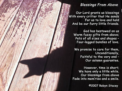 Photograph - Blessings From Above Cat Shadow by Robyn Stacey