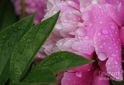 Blessings Of The Rains Art Print by Rachel Cohen