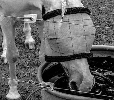 Expensive Photograph - Blind Horse Finds Water by Michael DeBlanc