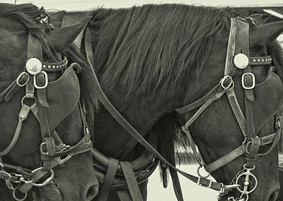 Photograph - Blinkers by JAMART Photography