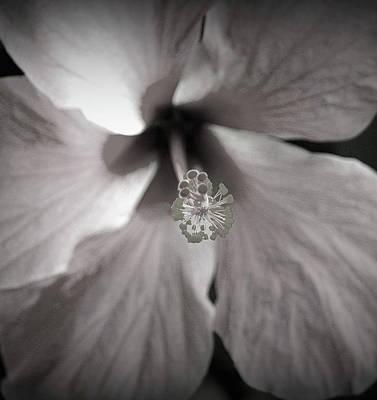 Heavenly Photograph - Bliss by The Art Of Marilyn Ridoutt-Greene