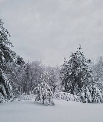 Photograph - Blizzard In New England by Mary Capriole