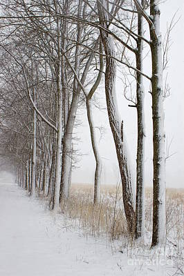 Photograph - Blizzard Path by Randy Pollard