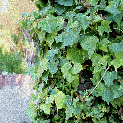 Photograph - Block Of Ivy by Hold Still Photography