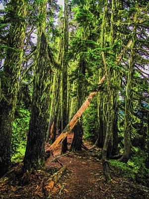 Photograph - Blocked Trail by Jason Brooks