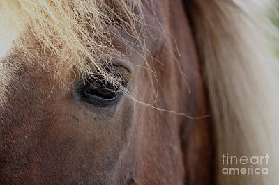 Photograph - Icelandic Horse Blond by Mary-Lee Sanders