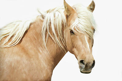 Photograph - Blonde Stallion by Athena Mckinzie
