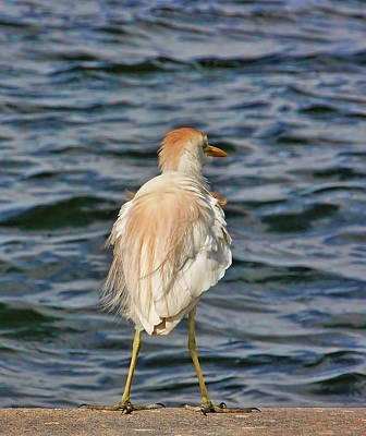 Photograph - Blondie by HH Photography of Florida