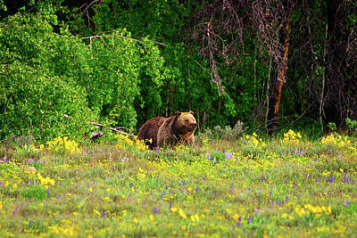 Photograph - Blondie In The Wildflowers by Greg Norrell