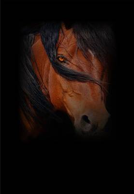 Blood Bay Horse Photograph - Blood Bay by Stephanie Laird