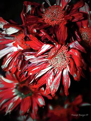 Photograph - Blood Flowers by Wesley Nesbitt
