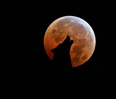 Surrealism Royalty-Free and Rights-Managed Images - Blood Full Moon and the Wolf by Marianna Mills