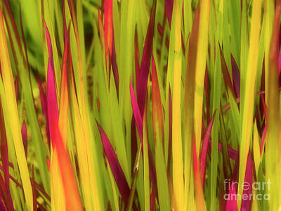 Photograph - Blood Grass by Tara Turner