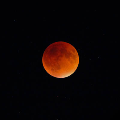 Photograph - Blood Moon 2 by Cathie Douglas