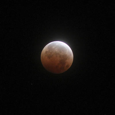 Photograph - Blood Moon by Cathie Douglas