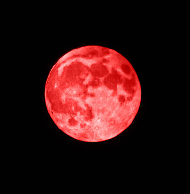 Night Photograph - Blood Moon by Shane Bechler