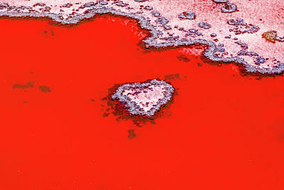 Sky Blue Photograph - Blood Red Heart Reef by Az Jackson