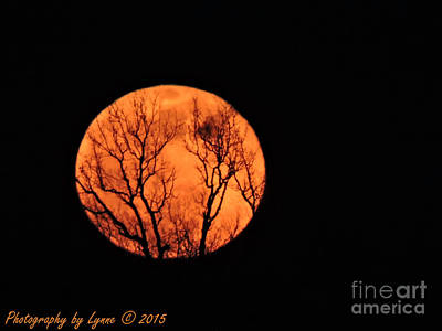 Photograph - Blood Red Moon by Gena Weiser