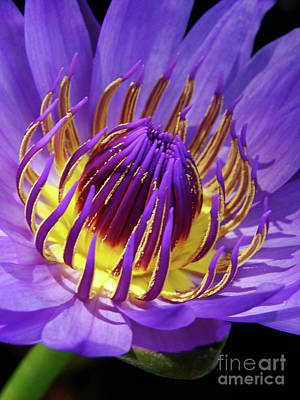 Photograph - Bloom Burst by Mark Holbrook