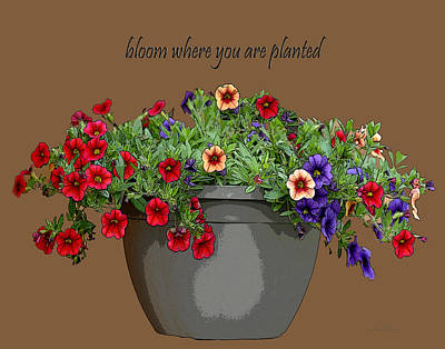 Diane Berry Drawing - Bloom by Diane E Berry