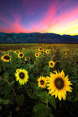 Photograph - Bloom by James Roemmling