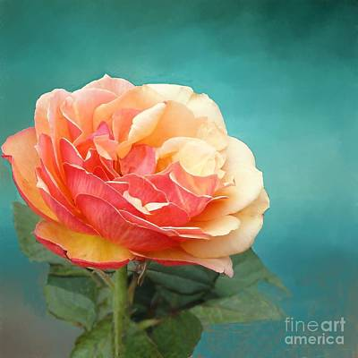 Photograph - Perfect Rose Of Spring by Janette Boyd