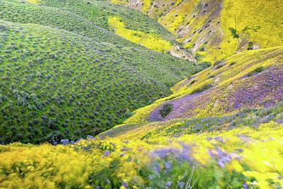 Wildflower Photograph - Bloom Series Five by Josh Whalen Fine Art Photography