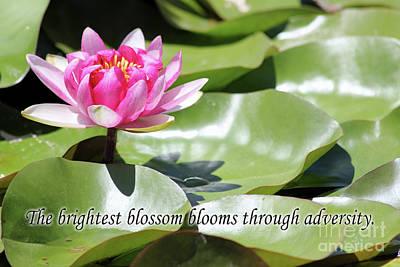 Photograph - Bloom Through Adversity by Alycia Christine