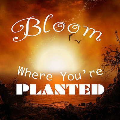 Photograph - Bloom Where You Are Planted 5007.02 by M K Miller