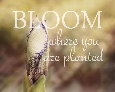Photograph - Bloom Where You Are Planted by Ann Powell