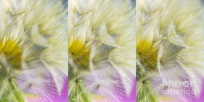 Abstract Flowers Royalty-Free and Rights-Managed Images - Bloomed 3 by Veikko Suikkanen
