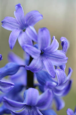 Photograph - Bloomin Blue by Glenn Gordon