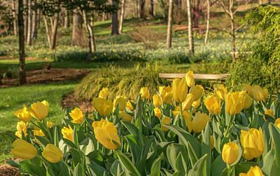 Bloomin Tulips Art Print