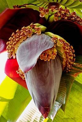 Photograph - Blooming Banana Tree 02 by Dora Hathazi Mendes