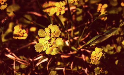 Photograph - Blooming Beauties by Pezibear